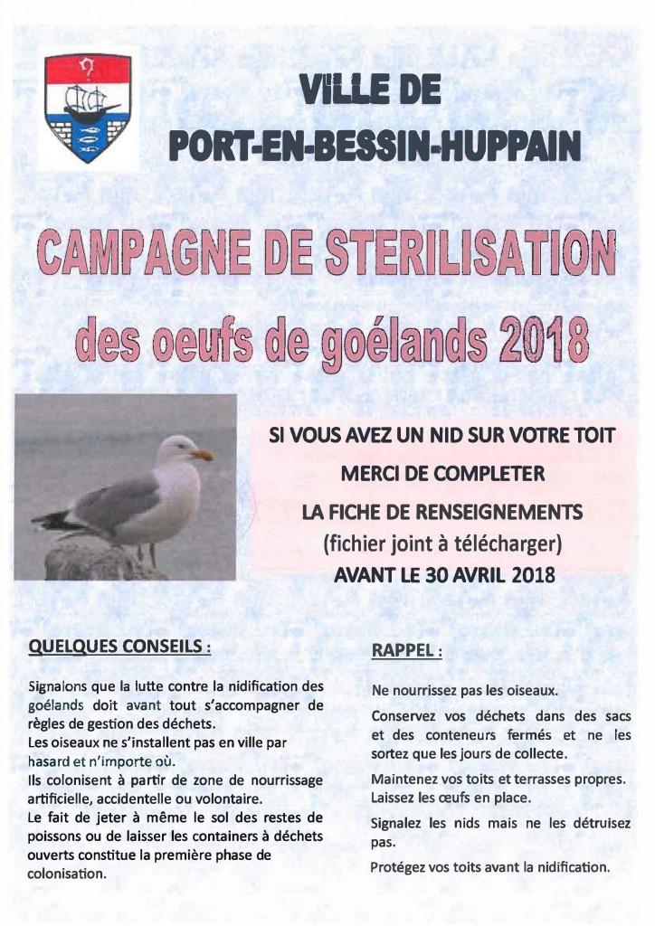 campagne stérilisation goelands (1)